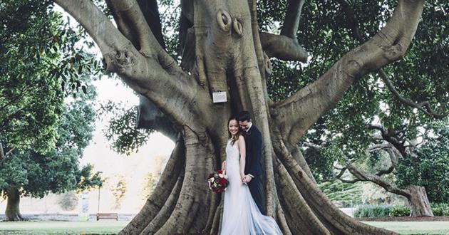 Fig Tree Lawn